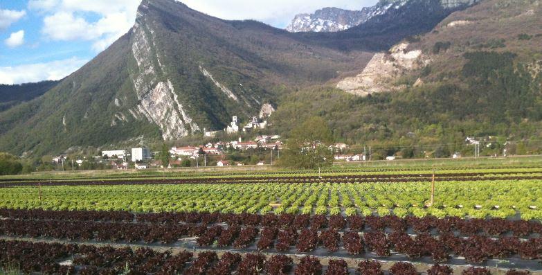 Plaine_agricole
